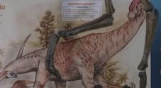 Ecuador, scoperti resti di specie di dinosauto erbivoro
