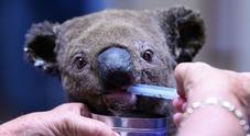Australia, emergenza incendi senza precedenti: 3 morti e strage di koala