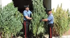 Boss della camorra ucciso, avrebbe finanziato la coltivazione di marijuana nel Fucino