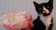 Non si accorge del gatto e avvia la lavatrice, Felix sopravvive a 35 minuti di centrifuga