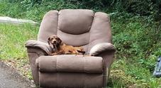 Abbandonato insieme alla sua poltrona preferita, il cane non si muove per giorni convinto di vederli tornare