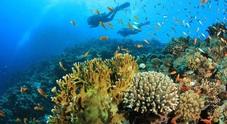 Providenciales e la sua Grace Bay gli splendidi segreti del mar dei Caraibi