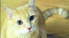 Colpi di carabina contro un gatto: «Non è un caso isolato»