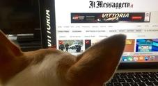 Oggi è la Giornata mondiale del cane in ufficio: i benefici di avere un quattrozampe alla scrivania