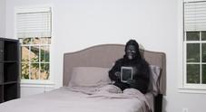 I letti degli umani sono più sporchi di quelli degli scimpanzé