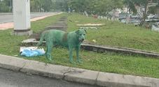 Cane verniciato di verde e abbandonato, i veterinari: «Morirà per intossicazione». Ira social