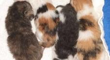 S.o.s. Enpa: serve latte per 4  gattini abbandonati /Che fare