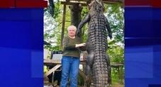 Coccodrillo uccide il suo cavallo preferito: nonna imbraccia il fucile e lo fa fuori