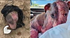 Cagnolina picchiata e sepolta viva in spiaggia con la testa al sole: si cerca una famiglia