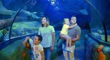 Dieci anni dell'acquario di Gardaland, testimonial il campione olimpico Max Rosolino