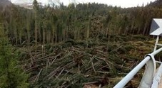 Rasa al suolo un'altra foresta storica in Friuli