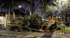 Albero caduto in Via Ettore Petrolini ai Parioli (foto Paolo Caprioli/Ag.Toiati)
