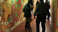 Le unità cinofile della Finanza in campo contro lo spaccio di droga