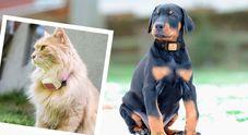 Collari Gps per cani e gatti attenzione agli hacker: possono rapire i cuccioli