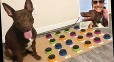 Stella, il cane che parla usando pulsanti: così chiede il cibo, la palla e di fare passeggiate Video