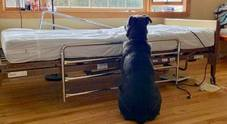 Il cane che aspetta il padrone morto in ospedale spezza il cuore agli Stati Uniti