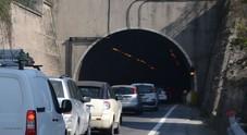 Cagnolino vaga sulla corsia di sorpasso nella galleria del'A14: salvato dai poliziotti