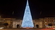 Torna il grande albero di Natale Bauli a Verona: acceso l'abete alto 20 metri