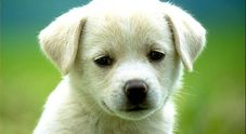 Cucciolo di cane gettato  dal cavalcavia, due ragazzi  lo salvano e lo adottano