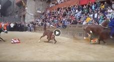 Palio di Siena nel caos, cavallo cade e muore: le immagini choc /Video