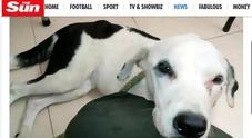 Nuvola, il cane abbandonato in aeroporto aspetta un mese il suo padrone, poi muore di crepacuore