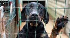 Lo lancia dall'auto, il cane torna: ma poi lo fa uccidere dal veterinario: condannati