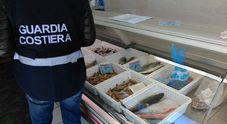 Settecento chili di pesce sequestrati e sanzioni per oltre 13mila euro