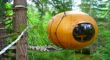 Sulle ghiande appese agli alberi a Vancouver in Canada il lusso è di casa