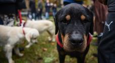 Il cane elisir di lunga vita, per gli scienziati riduce il rischio malattie