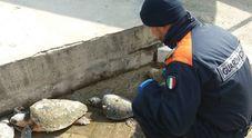 """Trovata sulla spiaggia un'intera """"famiglia"""" composta da 4 tartarughe"""