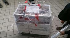 Cinquanta chili di pesce sequestrati al porto di Ancona: c'è pure la multa