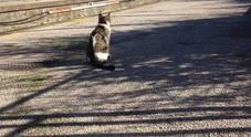 Gatto con collarino nero in stazione a Pompei: l'appello dei pendolari per ritrovar il padrone