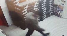 Blitz notturno in palestra: i ladri ripresi dalle videocamere