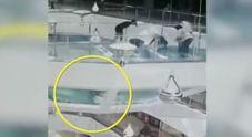 Ragazza inciampa e cade nella vasca degli squali: le immagini choc della videosorveglianza