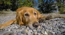 Cani, rimproveri e strattoni li rendono più stressati e pessimisti: meglio addestrarli giocando
