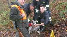 Cane precipita in un pozzo I vigili si calano dentro e riescono a portarlo in salvo