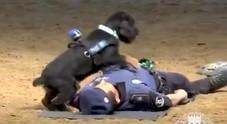 Cane fa il massaggio cardiaco e rianima il poliziotto crollato a terra