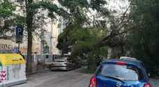 Vento forte, paura a Napoli: albero si abbatte su auto vicino al liceo