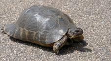 17 tartarughe e camaleonte  maltrattati: maximulta