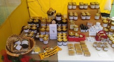Il miracolo del miele con gli Annibali: famiglia di apicoltori fin dal 1890