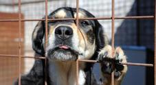 Empoli, anziana muore e lascia un milione di euro al Comune: «Costruite un canile e un gattile»