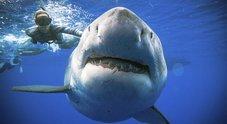 Paura alle Hawaii, squalo uccide un uomo a 100 metri dalla spiaggia