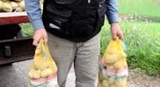 La truffa del venditore di patate: «Banconota rotta, me la cambia?»