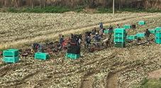 Stranieri sfruttati per il lavoro nei campi: 12 ore al giorno per cinque euro all'ora