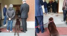 Il padrone è morto, il prete non fa entrare il cane in chiesa per l'ultimo saluto: il pianto di Pavel commuove