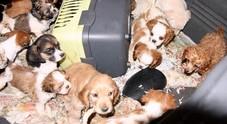 Traffico illecito di cuccioli di cane, blitz della Stradale: sei arresti