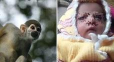 India, scimmia strappa neonato dalle braccia della madre e lo uccide