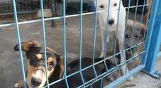 Due cani bruciati vivi perché abbaiavano troppo: trovati carbonizzati dalla padrona