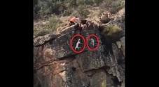 Dodici cani e un cervo precipitano da un burrone: è bufera animalista per il video choc