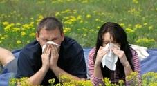 Non solo pollini, ci sono anche piante amiche di chi è allergico